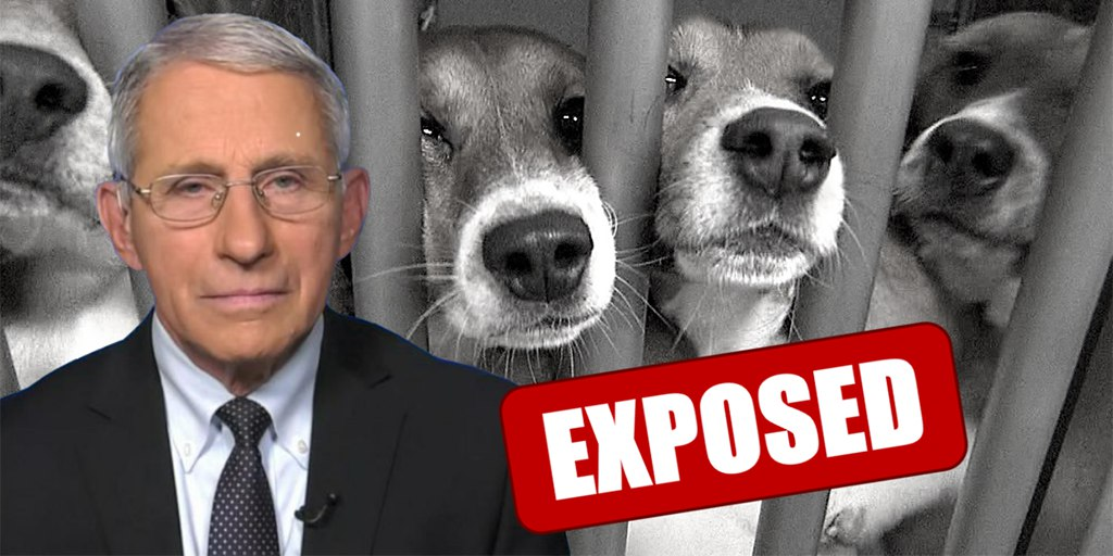 Dr Fauci Spent $424K On Experiments Where Dogs Were Bitten To Death By Flies